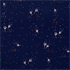 Picture of Dandelions - Dark Blue