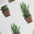 Picture of Sansevieria - Cotton Lawn - Off-White